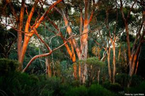 26_10_15 Goldfields-bush-(2)